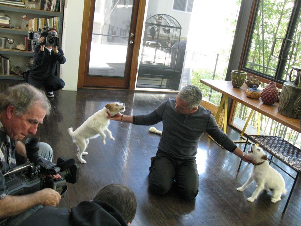 Cesar gibt heute einen Einblick in die hohe Kunst der Hundepsychologie. Wie gelingt es ihm, die Energie eines Tieres zu spüren? Wie schafft er es, d... - Bildquelle: Ryan Cass MPH - Emery/Sumner Joint Venture