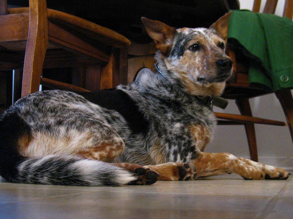 Peter Spano ist überglücklich - da er nun am Central Park wohnt, kann sich der New Yorker endlich einen Hund zulegen. Im Tierheim entscheidet er sic... - Bildquelle: Rive Gauche Intern. Television
