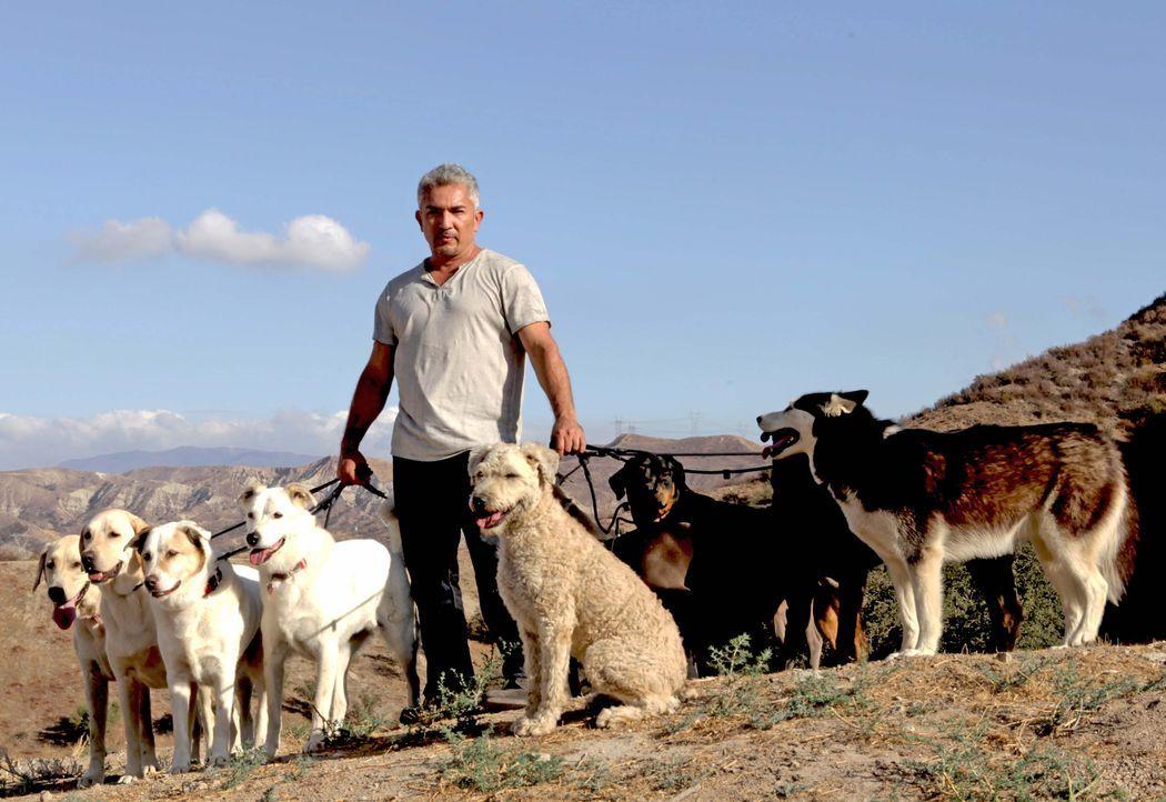 Cesar Millan mit Hunden in der Natur - Bildquelle: © Adina Pliskin