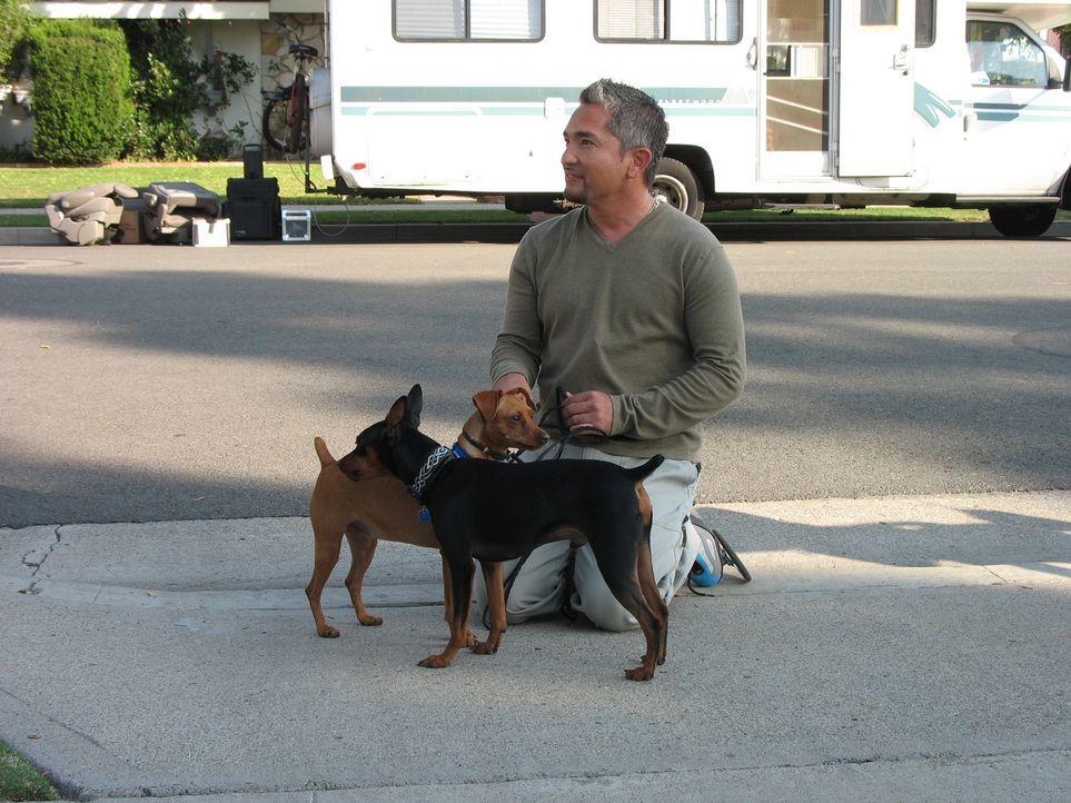 Cesar Millans psychologisches Hundecenter ist beides - ein Zuhause und ein Zufluchtsort für ungefähr 50 Hunde. Der Hundeprofi kann sich mit Hunden v... - Bildquelle: Rive Gauche Intern. Television