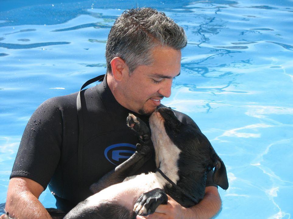 (3. Staffel) - Der Mann den die Hunde verstehen: Cesar Millan - Bildquelle: Rive Gauche Intern. Television