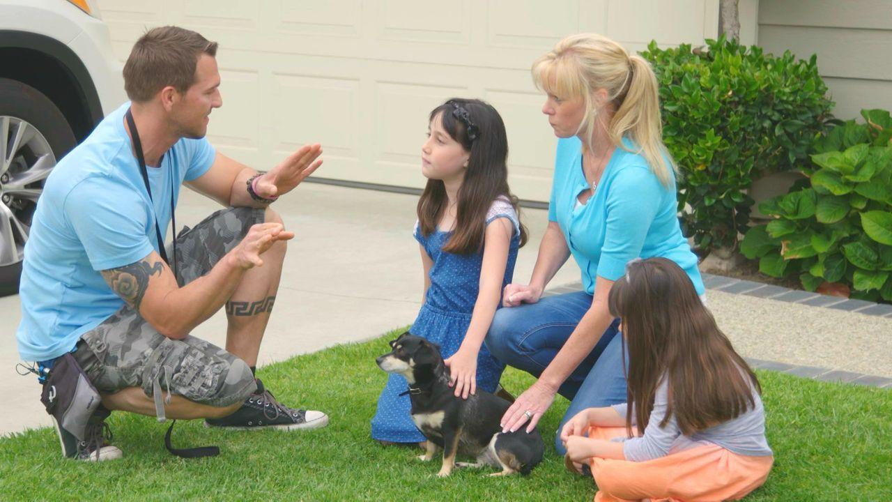 """(3. Staffel) - Hunde mit den Stempeln """"Schwer zu lieben"""", """"Außer Kontrolle"""" oder einfach """"Schwer vermittelbar"""" bekommen dank Hundetrainer Brandon Mc... - Bildquelle: 2015 Lucky Dog. All Rights Reserved."""
