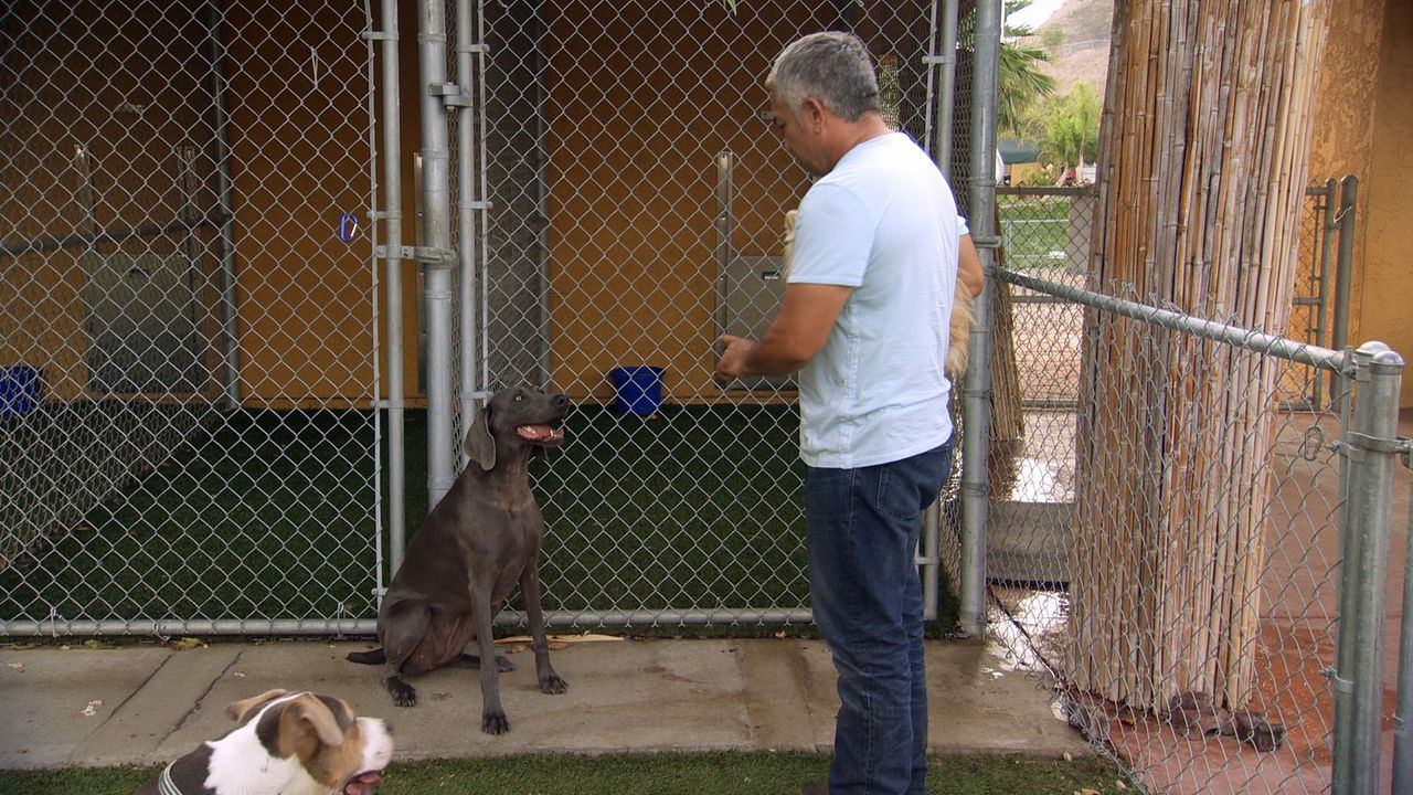 Die Arbeit mit Stella läuft gut, doch dann kommt der Schock für Cesar und alle Beteiligten: Die Hündin beißt die Nachbarin der Besitzer -  zum zweit... - Bildquelle: NGC/ ITV Studios Ltd