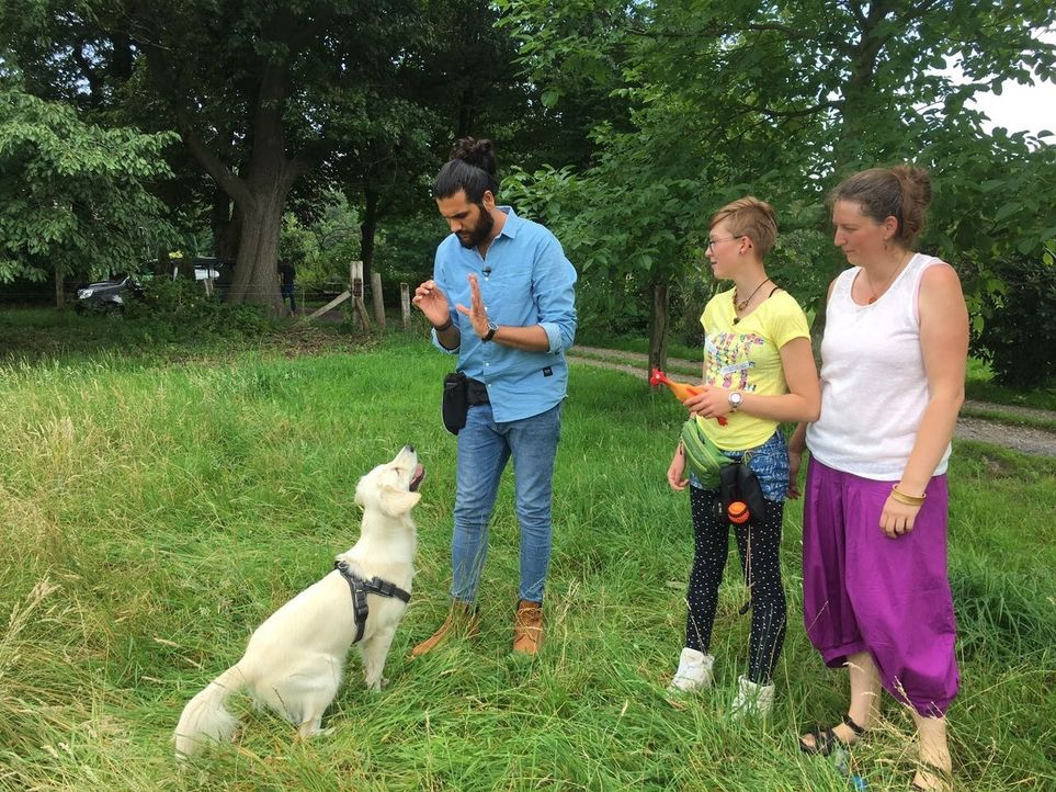Für die 14-jährige Maja (M.) hat Hundertrainer Masih Samin (l.) die neugierige Golden Retriever Hündin Emma ins Auge gefasst. Kann er sie so trainie... - Bildquelle: SAT.1