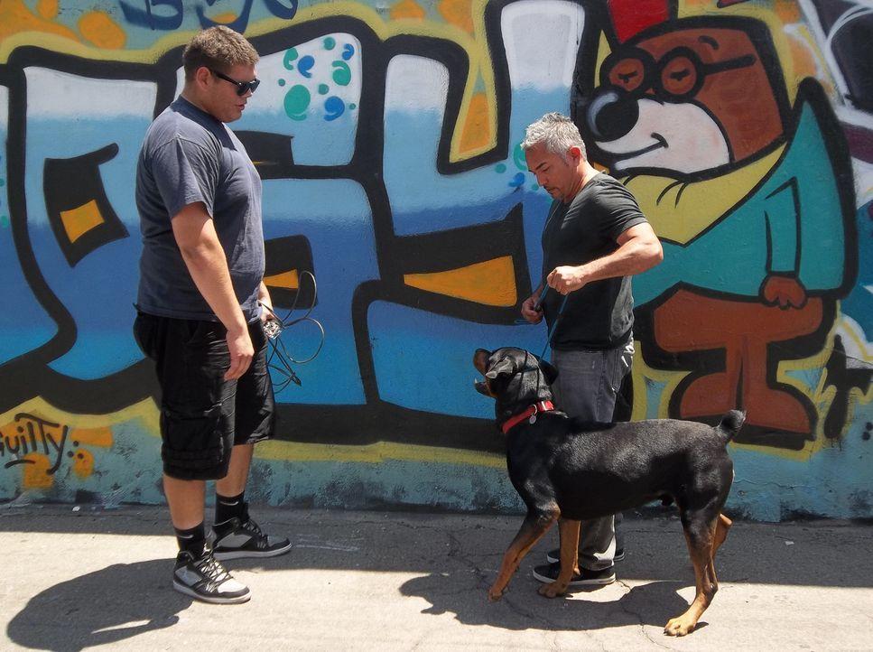 Der Footballstar Steve (l.) braucht dringend Cesars (r.) Hilfe, denn sein Rottweiler Shadow attackiert andere Hunde ... - Bildquelle: NGC/ ITV Studios Ltd