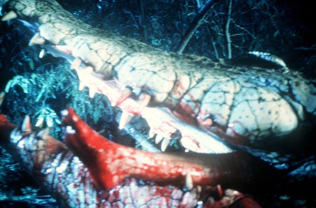 Die verärgerte Krokodilmutter kennt kein Erbarmen ... - Bildquelle: Nu Image