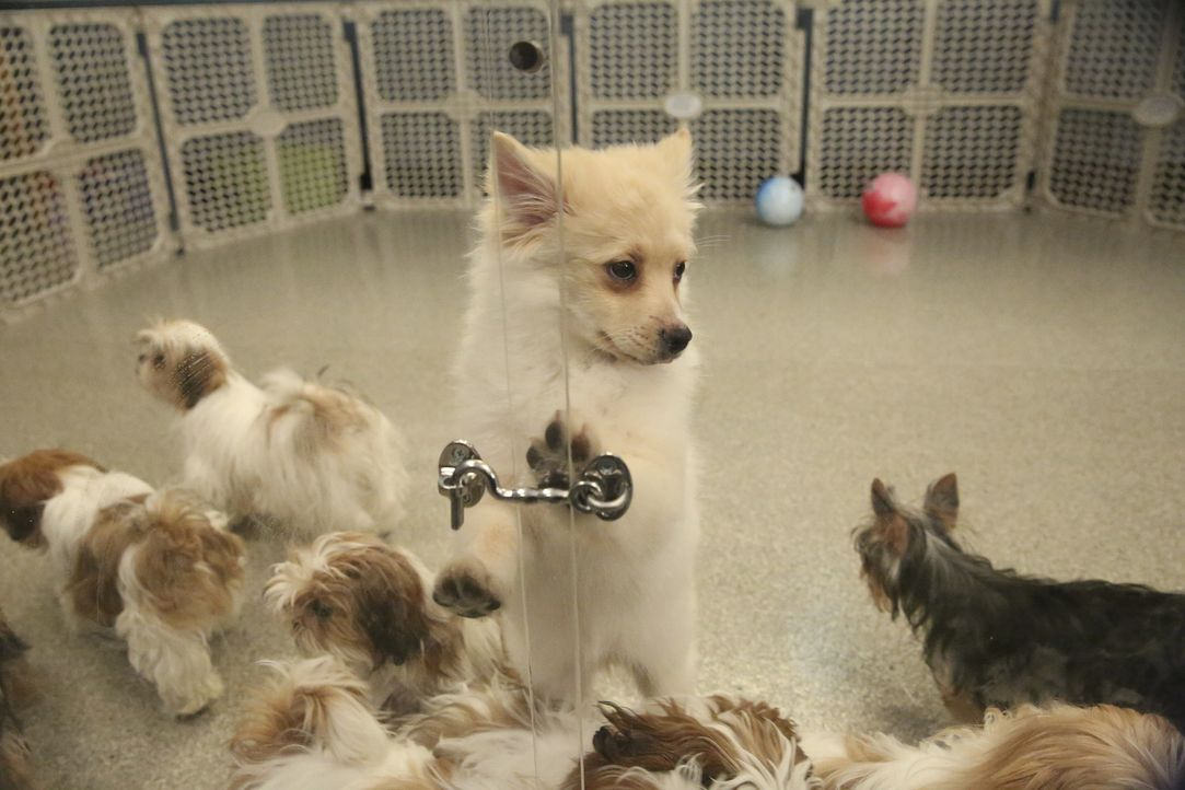 Hunde im Krankenhaus! Was hat das zu bedeuten? - Bildquelle: Mitchell Haaseth ABC Studios