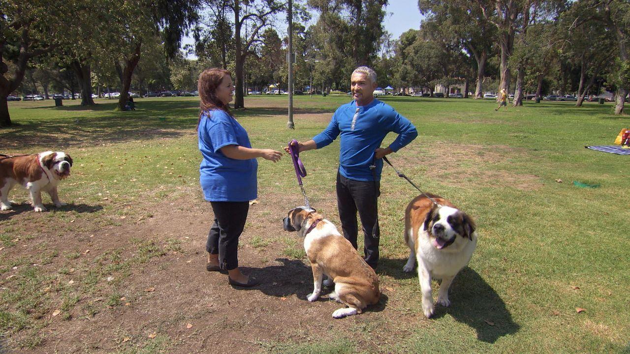 Wird es Cesar (r.) gelingen, die beiden Hunde Phoebe und Levi zu beruhigen und damit das Familienleben für Erin (l.) zu vereinfachen? - Bildquelle: NGC/ ITV Studios Ltd
