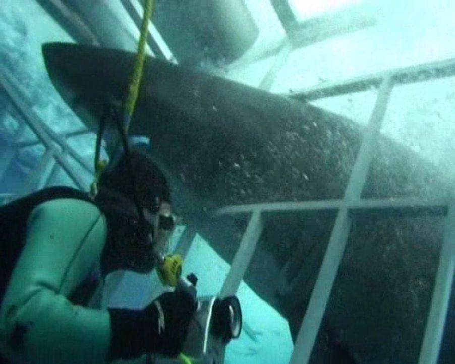 Als ein weißer Hai während mit seinem Maul in den Beobachtungs-Käfig unterwasser gerät, fürchten die beiden Taucher Patrick Walsh (Bild) und Paul Da... - Bildquelle: 2010, The Travel Channel, L.L.C.