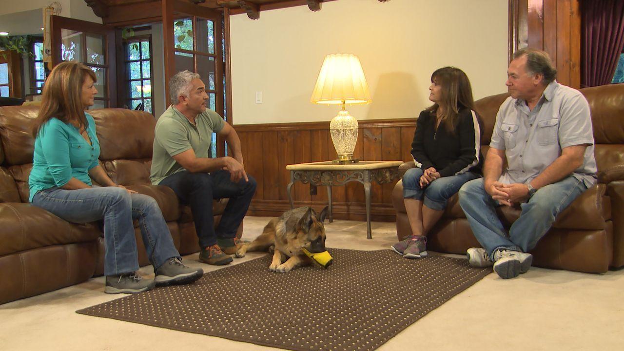 Debbie (2.v.r.) und Gray (r.) rufen Cesar (2.v.l.), damit er ihnen Hilft, Trishs (l.) Schäferhund Ovechkin unter Kontrolle zu bringen ... - Bildquelle: NGC/ ITV Studios Ltd