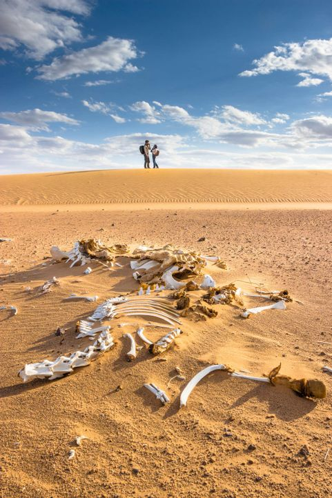 Als ihr Jeep im Treibsand steckenbleibt, müssen Ben (August Wittgenstein, l.) und Lucie (Jennifer Ulrich, r.) zu Fuß weitergehen. Die sengende Son... - Bildquelle: Richard Krause SAT.1