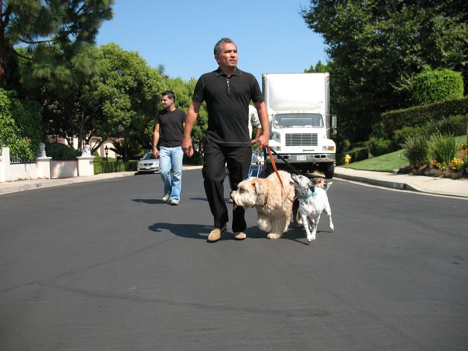 Der Hundeprofi Cesar Millan (r.) ist momentan der berühmteste und gefragteste Experte in Sachen Hundetraining ... - Bildquelle: Rive Gauche Intern. Television