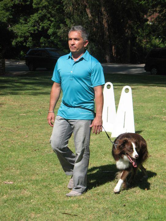 Der Australian Shepherd Annabelle braucht die Hilfe des Hundeflüsterers Cesar Millan ... - Bildquelle: Rive Gauche Intern. Television