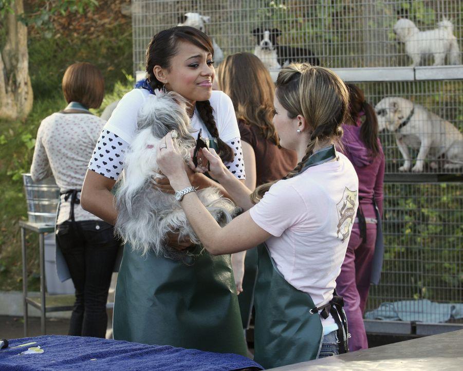 Ashleigh (Amber Stevens, l.) macht die Arbeit im Tierheim Spaß, auch wenn die kleinen Hunde nicht immer so wollen, wie sie es gerne möchte ... - Bildquelle: ABC Family